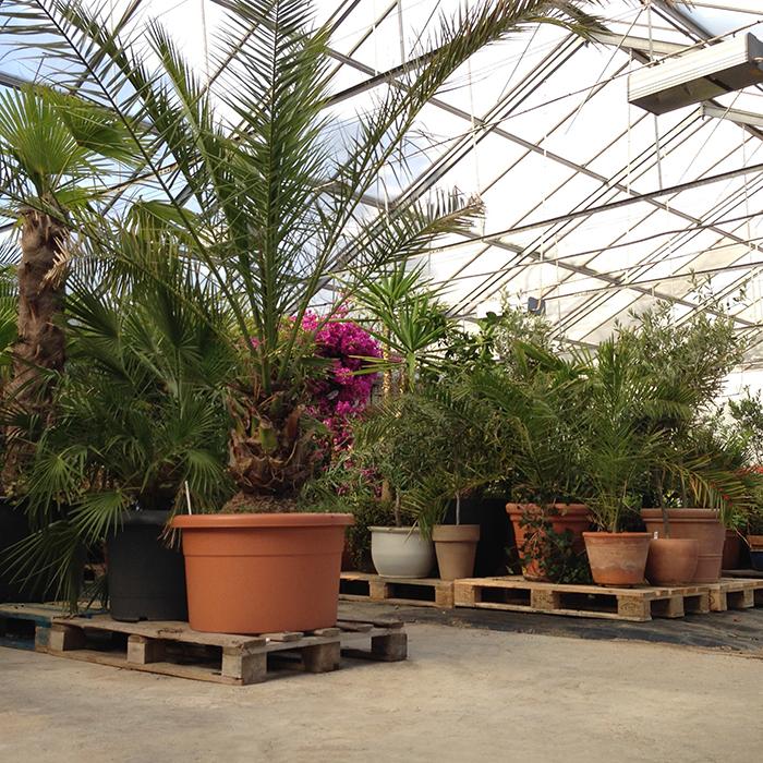 lilla toscana växthotell vinterförvaring medelhavsväxter