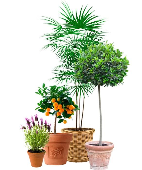 lilla toscana växthotell medelhavsväxter i krukor